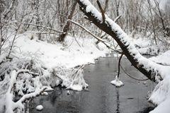 Wild stream Royalty Free Stock Photo