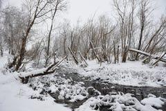 Wild stream Stock Image