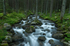 Wild stream in Low Tatras Royalty Free Stock Image