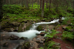 Wild stream in Low Tatras Royalty Free Stock Images