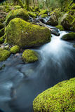 Wild stream in old forest, water blurred in motion Royalty Free Stock Images
