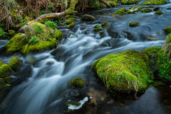 Wild stream in old forest, water blurred in motion Stock Photography