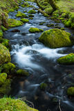 Wild stream in old forest, water blurred in motion Stock Photos