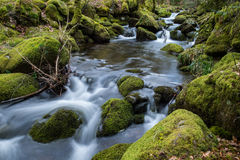 Wild stream in old woodland,time lapse water motion Royalty Free Stock Images
