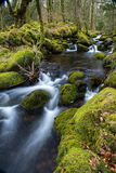 Wild stream in old woodland,time lapse water motion Royalty Free Stock Photography