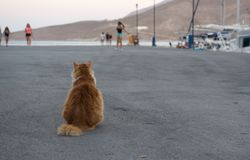 Wild street cat, sleepy cat in the street,  cat, street cat in Tilos island Royalty Free Stock Photography