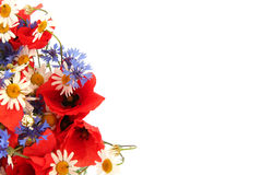 Free Wild Summer Flowers Royalty Free Stock Photos - 2742948