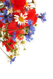 Wild summer flowers Stock Photography