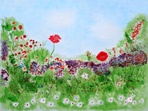 Wild summer flowers on meadow. Watercolor Hand Drawn and Painted Royalty Free Stock Images