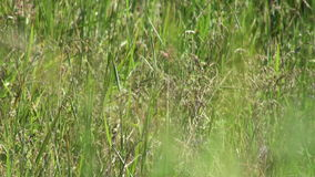 Wild summer grass Royalty Free Stock Photo