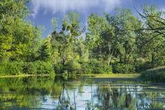 Wild summer lake Royalty Free Stock Image