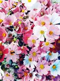 Wild summer meadow flowers bouquet, background. stock image