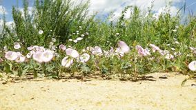Wild summer meadow flowers sway in the wind in a field stock footage