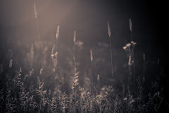Wild summer meadow royalty free stock photos