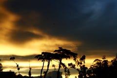 Wild sunset Stock Photos