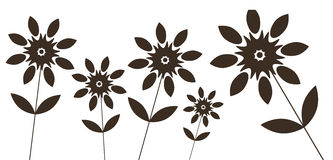 wild svart blomma Arkivfoto