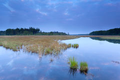 Wild swamp in forest at dusk Royalty Free Stock Photography