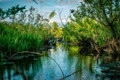 Wild swamp silent river reflection landscape. Swamp reflection stock image