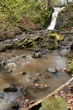 Wild Swedish creek Stock Photos