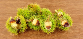Wild Sweet Chestnuts Stock Photos