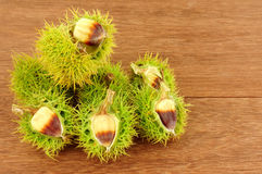 Wild Sweet Chestnuts Royalty Free Stock Images