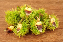 Wild Sweet Chestnuts Royalty Free Stock Photo