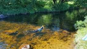 Wild swimming in a Dartmoor river dartmoor uk. Wild Swimming is very popular pastime in the West country in the uk royalty free stock photos