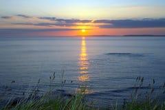 Wild tall grass yellow sunset Royalty Free Stock Image