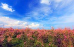 Wild tamarink, Tamarix ramosissima and blue sky Royalty Free Stock Image