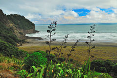 Wild Tasman Sea. New Zealands wild and exotic coastline Royalty Free Stock Photography