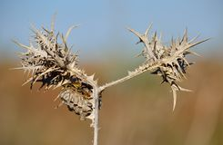Wild thistle and wasp nest Stock Photos