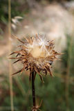 Wild thorny plant, in flowering. A detail of a wild field, with a thorny plant in flowering, portrait cut Royalty Free Stock Image