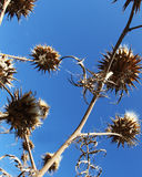 Wild thorny plants from below Royalty Free Stock Images
