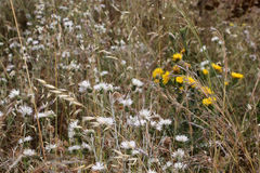 Wild thorny plants and flowers. A detail of a wild field, with of some thorny plants and some flowers, landscape cut stock photo
