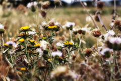 Wild thorny plants and flowers, pop colours. A detail of a wild field, with of some thorny plants and some flowers, landscape cut royalty free stock images