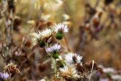 Wild thorny plants and flowers, pop colours. A detail of a wild field, with of some thorny plants and some flowers, landscape cut royalty free stock photography
