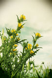 Wild thorny plants and flowers, vintage. A detailed view of the yellow flowers of a thorny plant, the sky blurred in the background, portrait cut Stock Photo