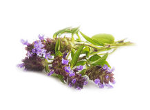 Wild thyme herb isolated. On white Stock Photos
