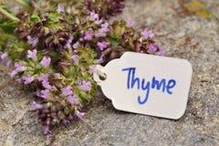 Wild Thyme Thymus vulgaris. Macro Stock Image
