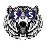 Wild tiger wearing glasses with dollar sign Illustration with wild animal for t-shirt, tattoo sketch, patch. T-shirt print with wild animal wearing glasses with royalty free stock photo