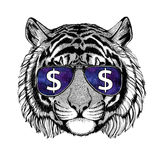 Wild tiger wearing glasses with dollar sign Illustration with wild animal for t-shirt, tattoo sketch, patch. T-shirt print with wild animal wearing glasses with royalty free stock image