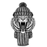Wild tiger wearing knitted hat and scarf. Wild animal wearing knitted hat and scarf stock photos