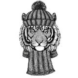 Wild tiger wearing knitted hat and scarf. Wild animal wearing knitted hat and scarf stock image