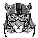 Wild tiger wearing motorcycle helmet, aviator helmet Illustration for t-shirt, patch, logo, badge, emblem, logotype Stock Photos