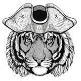 Wild tiger wearing pirate hat Cocked hat, tricorn Sailor, seaman, mariner, or seafarer. Wild animal wearing pirate cocket hat Royalty Free Stock Photos