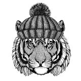 Wild tiger wearing winter knitted hat. Wild animal wearing winter knitted hat Image for tattoo, badge, t-shirt stock images