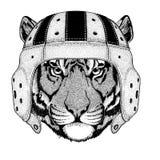 Wild tiger Wild animal wearing rugby helmet Sport illustration Royalty Free Stock Image