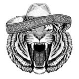 Wild tiger Wild animal wearing sombrero Mexico Fiesta Mexican party illustration Wild west. Wild animal wearing sombrero Mexico Fiesta Mexican party illustration Royalty Free Stock Image