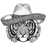 Wild tiger Wild animal wearing sombrero Mexico Fiesta Mexican party illustration Wild west. Wild animal wearing sombrero Mexico Fiesta Mexican party illustration stock illustration