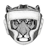 Wild tiger Wild boxer Boxing animal Sport fitness illutration Wild animal wearing boxer helmet Boxing protection Image. Wild boxer Boxing animal Sport fitness Royalty Free Stock Image